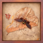 Cicada Exotica 12 x 12
